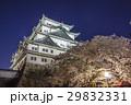 城 天守閣 名古屋城の写真 29832331