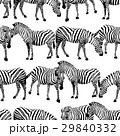 Zebra seamless pattern.  29840332