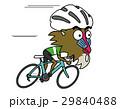 ロードバイクに乗って高速走行するマントヒヒ 29840488