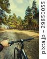 自転車 森林 林の写真 29850055