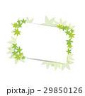 青紅葉 葉 新緑のイラスト 29850126