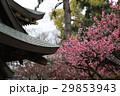 日本 ジャパン 日本国 29853943
