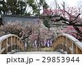 日本 ジャパン 日本国 29853944