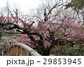 日本 ジャパン 日本国 29853945