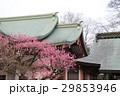 日本 ジャパン 日本国 29853946