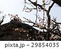 日本 ジャパン 日本国 29854035