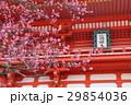 日本 ジャパン 日本国 29854036