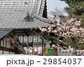 日本 ジャパン 日本国 29854037