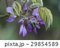 植物 工場 プランツ 29854589