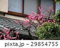 日本 ジャパン 日本国 29854755