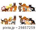 犬と猫のグループ 29857259