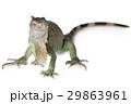 動物 は虫類 ハ虫類の写真 29863961