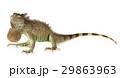 動物 は虫類 ハ虫類の写真 29863963