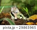 動物 は虫類 ハ虫類の写真 29863965