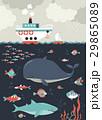 海 サカナ 魚のイラスト 29865089