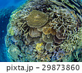 海中 海 沖縄の写真 29873860