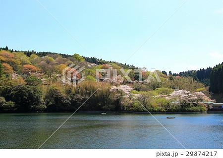 桜と池 29874217