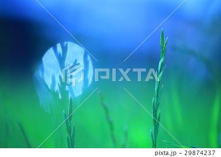 夏の草原と空 アップ 29874237