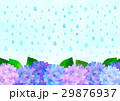 雨とあじさい 29876937