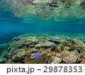 海中 珊瑚 海の写真 29878353