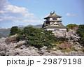 丸岡城 城 桜の写真 29879198