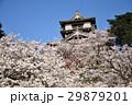 丸岡城 桜 城の写真 29879201