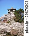 丸岡城 桜 城の写真 29879203