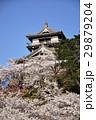 丸岡城 城 桜の写真 29879204