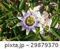 緑 花 お花の写真 29879370