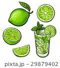 ライム レモン 檸檬のイラスト 29879402
