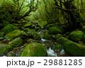 鹿児島 屋久島 白谷雲水峡 29881285