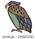 鷹のイラスト 29882281