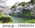 千鳥ヶ淵の桜 29883044