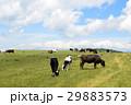 美ヶ原高原 美ヶ原 牧場の写真 29883573