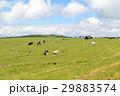 美ヶ原高原 美ヶ原 牧場の写真 29883574