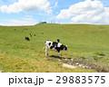美ヶ原高原 美ヶ原 牧場の写真 29883575