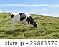 美ヶ原高原 美ヶ原 牧場の写真 29883576