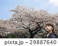 色鮮やかな桜 女性 29887640