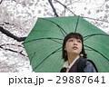 色鮮やかな桜 傘をさす女性 29887641