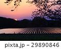 朝陽 29890846