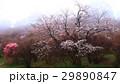 霧の朝 29890847