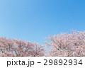 桜 青空 花の写真 29892934