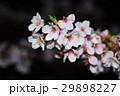 桜 29898227