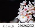 桜 29898232