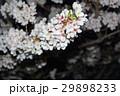 桜 29898233