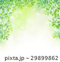 春 新緑 若葉のイラスト 29899862