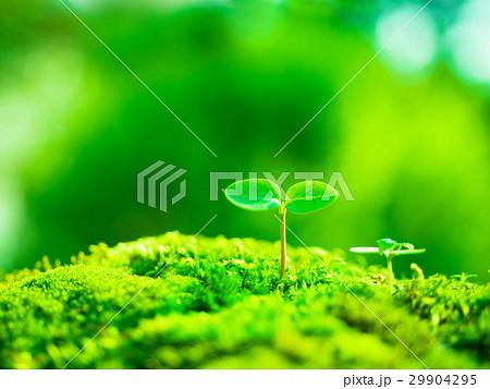 植物の芽生え 29904295