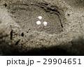 スッポン(鼈)カメ(亀) 29904651