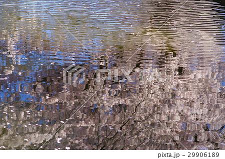 に 映る 影 水面