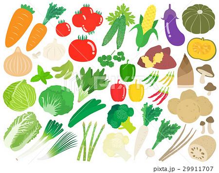 野菜のイラストセット 29911707